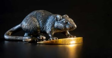 Canh Tý bạn là loại chuột nào ?